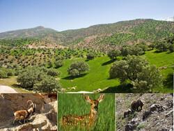 خبرهای خوش زیستمحیطی برای دیار سنگ و آب / افزایش گونههای نادر و توقف خشکیدگی بلوط