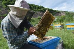 امسال ۹۴ تن عسل در شهرستان بهار برداشت شد