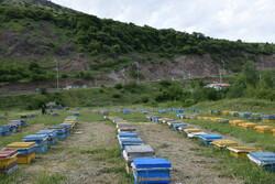 سالانه ۲۷۰۰ تُن عسل در لرستان تولید میشود