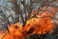 Wildfire contained in protected area in southwestern Iran