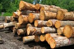۲۰ تن چوب جنگلی قاچاق در  زنجان کشف وضبط شد