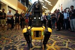 سگ های رباتیک امسال به بازار می آیند