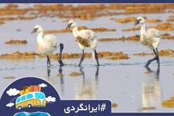 چگونه به تالاب شادگان خوزستان برویم؟