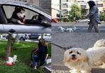 «سگ گردانی» پدیدهای ناپسند در استان سمنان/ خودنمایی با حیوانات