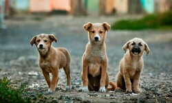 Dogs' overpopulation, a major threat to the wildlife