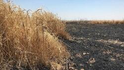 Irak'ta son bir ayda 40 bin dönüm tarım arazisi kül oldu