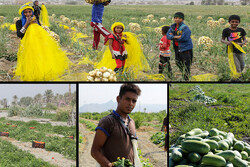 کشاورزان دلخوش در اوج محرومیت/ ورق داستان تلخ برگشته است