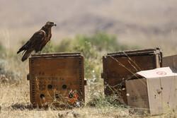 از دستگیری متخلفان شکار تا کشف محل نگهداری غیرمجاز پرندگان