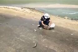 علت بیرون پریدن ماهیها از دریا در نزدیکی جزیره «شیف» مشخص شد
