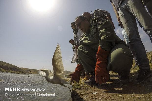 """اطلاق 15 فصيلة حيوانية في محمية """"خجير"""" شرقي طهران"""