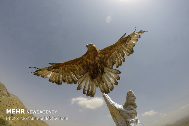 بازگشت ۱۷۰ پرنده به طبیعت/ هنرمندان پیشگام عرصه محیط زیست باشند