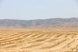 ۳۶ هزار هکتار از مزارع کشاورزی قزوین به زیر کشت جو رفت