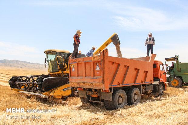ضرورت تقویت و تشدید نظارتها برای جلوگیری از قاچاق گندم