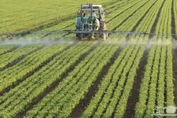 تغییر الگوی کشت نجاتبخش کشاورزی/ تزریق نفسی تازه به دشت قزوین