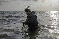 صید ماهی حلوا سفید در صیدگاههای خوزستان و بوشهر ممنوع شد
