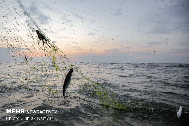 پروانه صیادی ماهی در رودخانههای اندیمشک صادر میشود