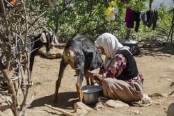 گرمی کے موسم میں قبائل کی ہجرت