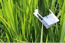 توزیع ۲۸۰ هزار تریکو کارت در میان کشاورزان گیلانی