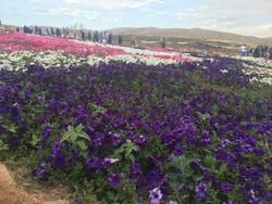 باغ گل های پژمرده شیراز/ استانداردی که رعایت نشد