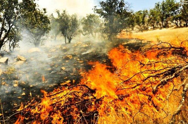 کابوس آتش در جنگل های کردستان/آتش سوزی ها دو و نیم برابر شد
