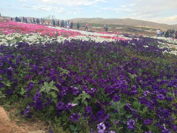 گزارش مهر از  باغ گل های پژمرده شیراز