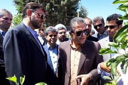 قیمت تمام شده تولید دام سبک ۲ هزار تومان است/کاهش تولید شیر تهران