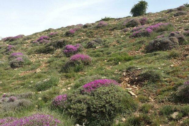 عملیات بیولوژیک مرتع در استان سمنان ۷۰ درصد پیشرفت دارد