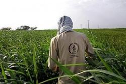 اعزام ۳۳ گروه جهادی به مناطق محروم مستعد کشاورزی خراسان جنوبی