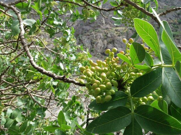فائو «۲۰۲۰» را سال قرنطینه گیاهی معرفی کرد