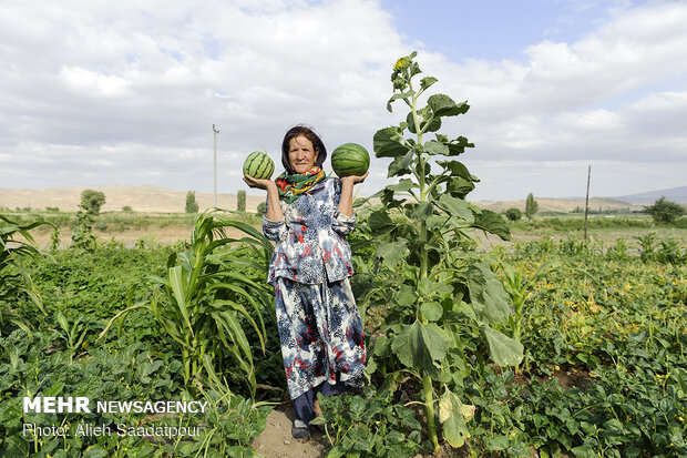 Key role of women in economy of rural families in NW Iran