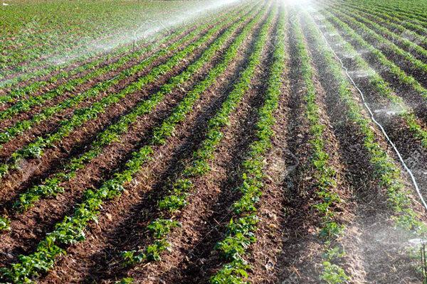 ۳۱۰ خانوار از خدمات بخش کشاورزی بهره مند می شوند