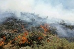 امسال ۱۲۱۵ هکتار از سطح جنگلها و مراتع کردستان طعمه حریق شد