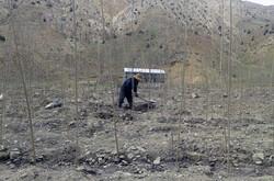 عامل تخریب منابع طبیعی اسدآباد به آبیاری و حفاظت از درختان محکوم شد