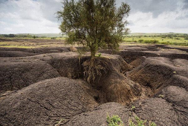 همایش بزرگداشت روز جهانی خاک در گلستان برگزار می شود