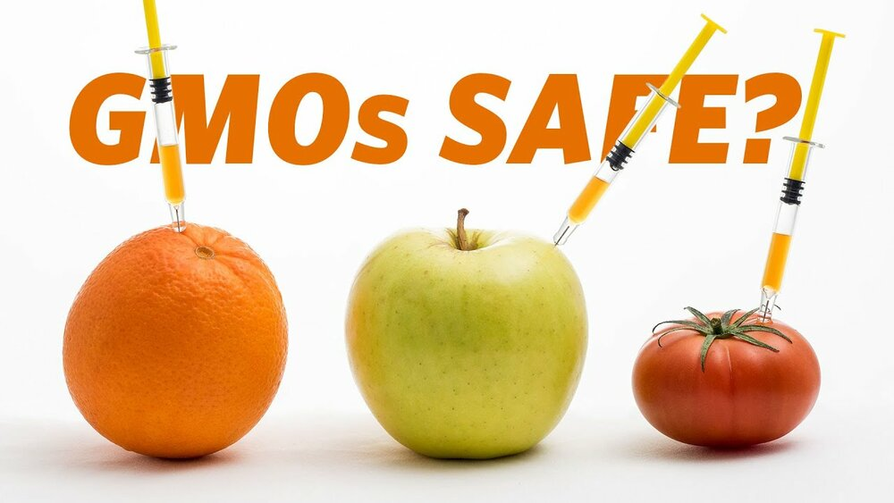 High school essays on genetically modified foods