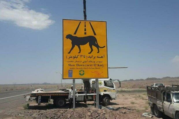 تابلوهای هشدار دهنده مسیر تردد یوز آسیایی در استان سمنان نصب شد