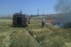 بیش از ۸۰ هکتار از زمین های کشاورزی تنگ ارم در آتش سوخت