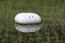 ربات پاکسازی مزارع برنج از راه رسید