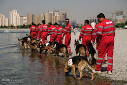 Red Crescent rescue dogs' drill in Tehran