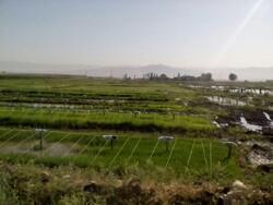 کشت محصولات آبدوست در لرستان ممنوع شد/ کاهش آبهای زیرزمینی در ۴ شهرستان