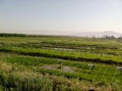 ممنوعیت کشت برنج در استانهای غیرشمالی ابلاغ شد