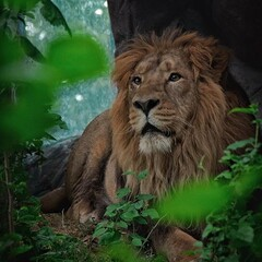 'Efforts being made to save Persian lion from extinction'