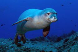Marine species population increased in protected areas