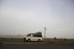 مبارزه با ملخ صحرایی در سطح ۶۰۰ هزار هکتار تا تیرماه امسال