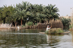 Shadegan wetland water level rises after heavy rain