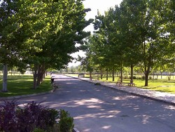 'Trees, vegetation not a solution to urban air pollution'