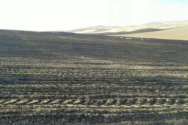 بارش های پاییزه باعث رشد مناسب سطح سبز غلات شده است