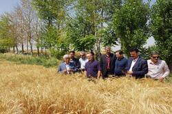 بازدید معاون وزیر جهاد کشاورزی از مزرعه کلزا و گندم بذری در قزوین