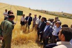 معاون وزیرجهاد کشاورزی از مزارع الگویی قزوین بازدید کرد