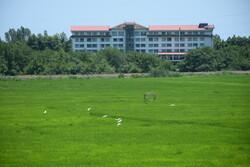 مزارع برنج آستارا